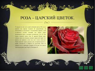 РОЗА – ЦАРСКИЙ ЦВЕТОК. У каждого из нас есть самый любимый цветок. Но во все