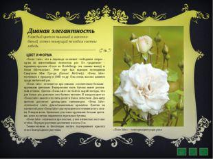 Дивная элегантность Каждый цветок пышный и молочно-белый, словно плывущий по