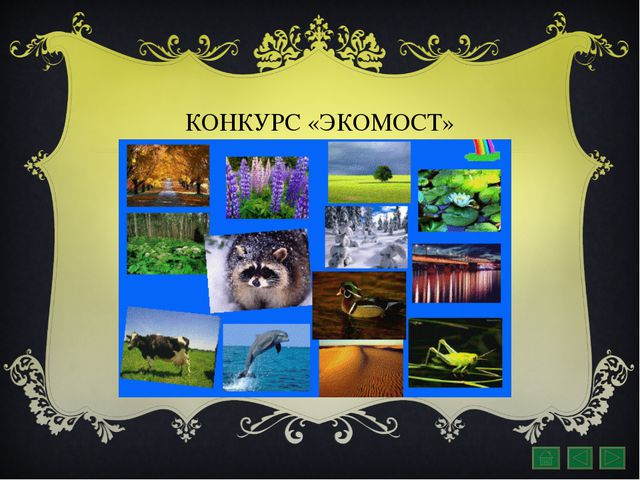 КОНКУРС «ЭКОМОСТ»