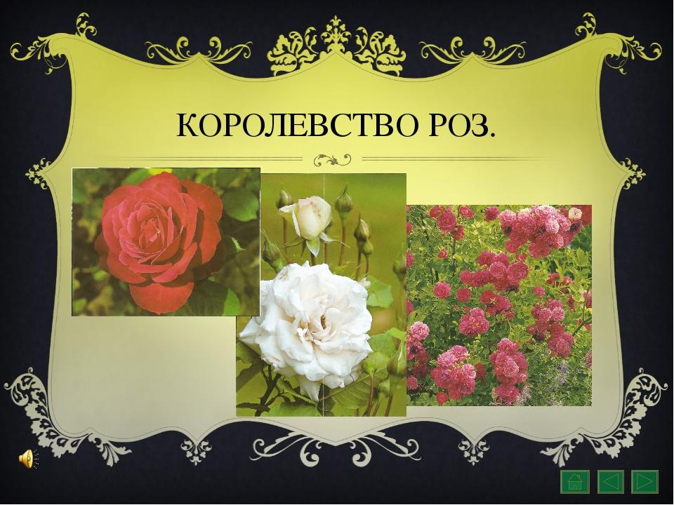 КОРОЛЕВСТВО РОЗ.