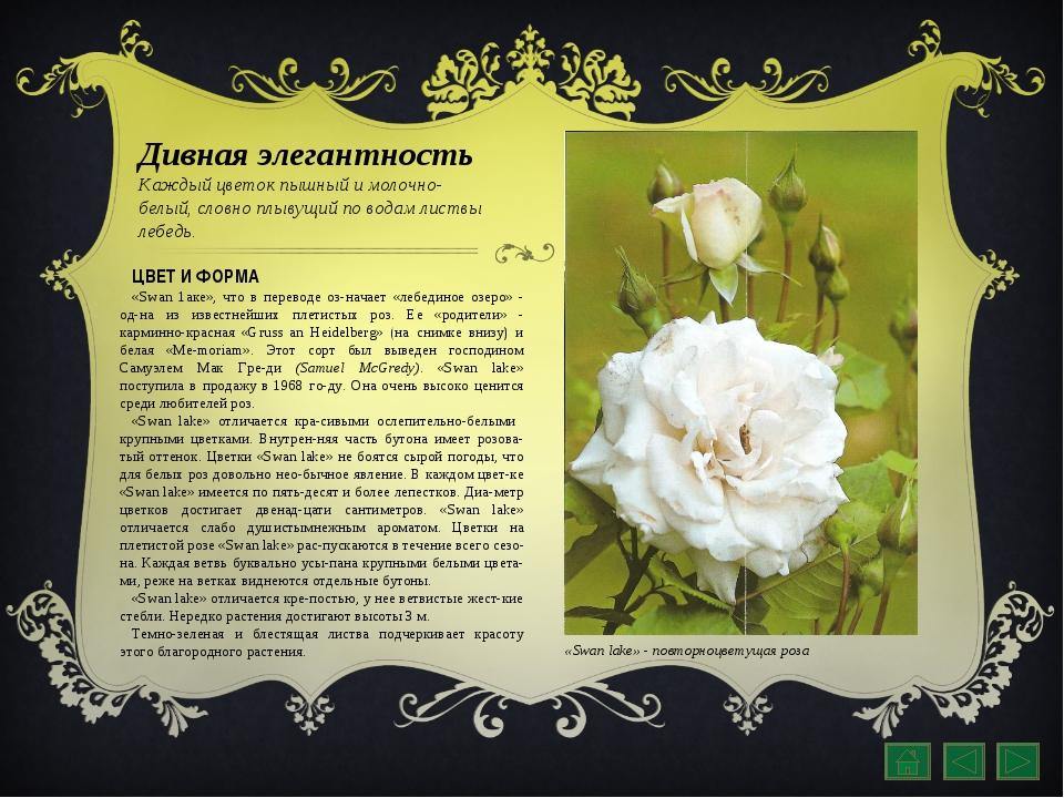 Дивная элегантность Каждый цветок пышный и молочно-белый, словно плывущий по...