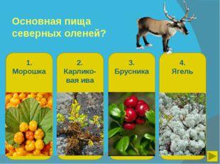 Основная пища северных оленей? 1. Морошка 2. Карлико-вая ива 3. Брусника 4. Я