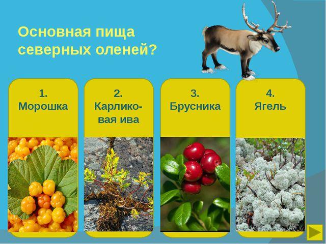 Основная пища северных оленей? 1. Морошка 2. Карлико-вая ива 3. Брусника 4. Я...