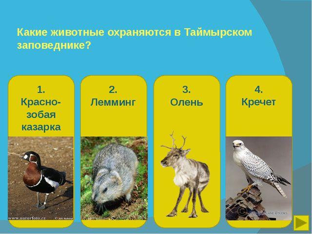 Какие животные охраняются в Таймырском заповеднике? 1. Красно-зобая казарка 2...
