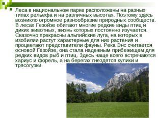 Леса в национальном парке расположены на разных типах рельефа и на различных