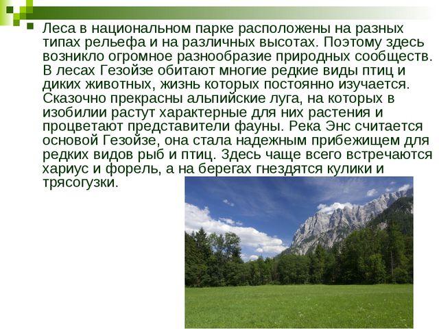 Леса в национальном парке расположены на разных типах рельефа и на различных...