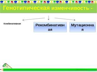 Генотипическая изменчивость - неопределенная - индивидуальная. Комбинативная