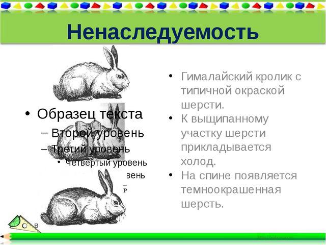 Ненаследуемость Гималайский кролик с типичной окраской шерсти. К выщипанному...