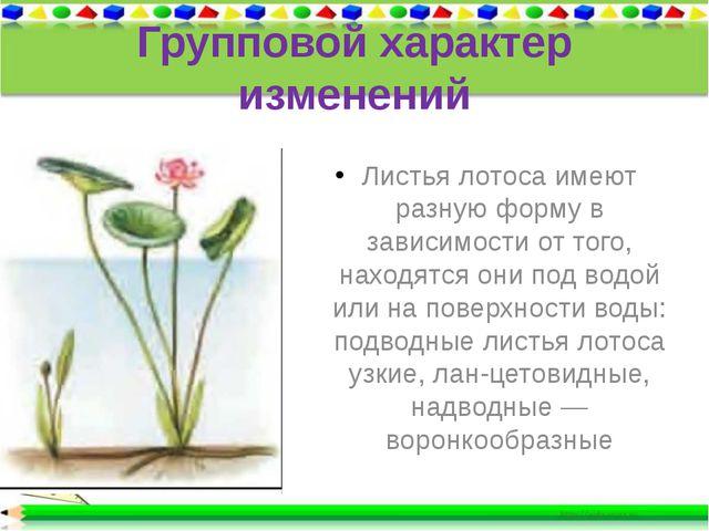Групповой характер изменений Листья лотоса имеют разную форму в зависимости о...
