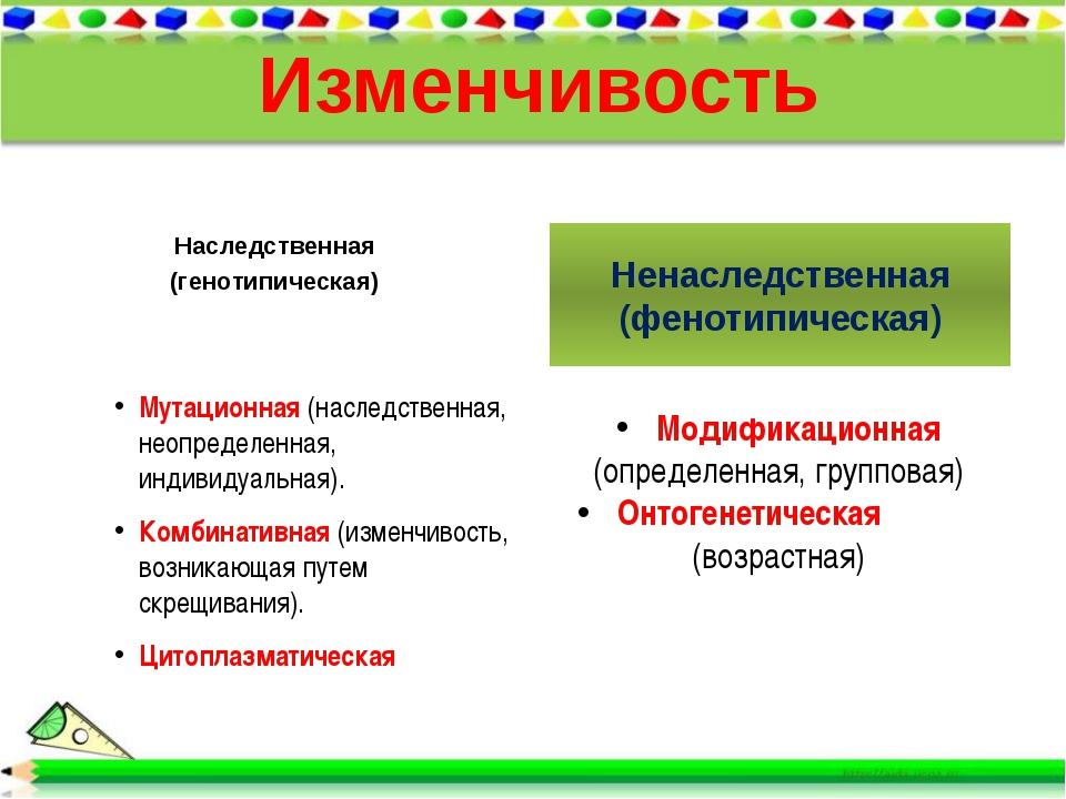 Изменчивость Наследственная (генотипическая) Ненаследственная (фенотипическая...