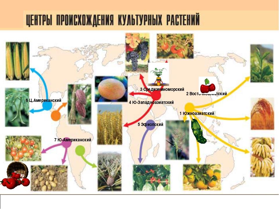 Карта центров происхождения культурных растений 1 Южноазиатский 2 Восточноаз...