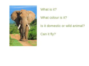 What is it? What colour is it? Is it domestic or wild animal? Can it fly?