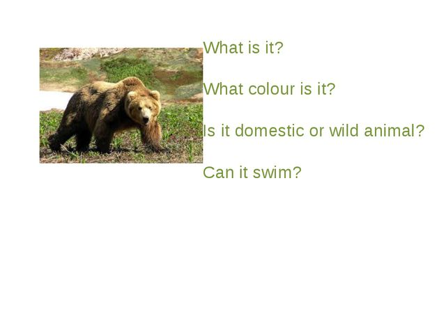 What is it? What colour is it? Is it domestic or wild animal? Can it swim?