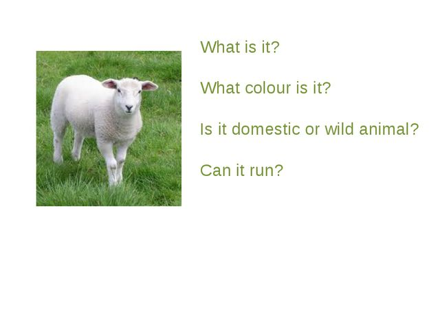 What is it? What colour is it? Is it domestic or wild animal? Can it run?