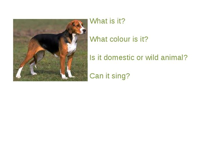 What is it? What colour is it? Is it domestic or wild animal? Can it sing?