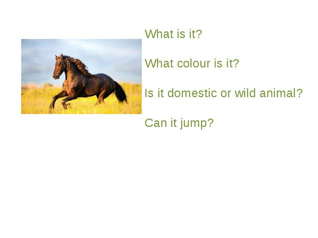 What is it? What colour is it? Is it domestic or wild animal? Can it jump?