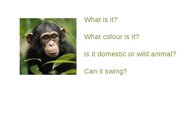 What is it? What colour is it? Is it domestic or wild animal? Can it swing?