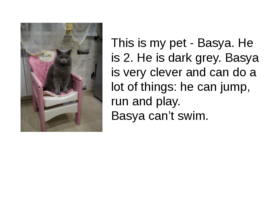 This is my pet - Basya. He is 2. He is dark grey. Basya is very clever and ca...