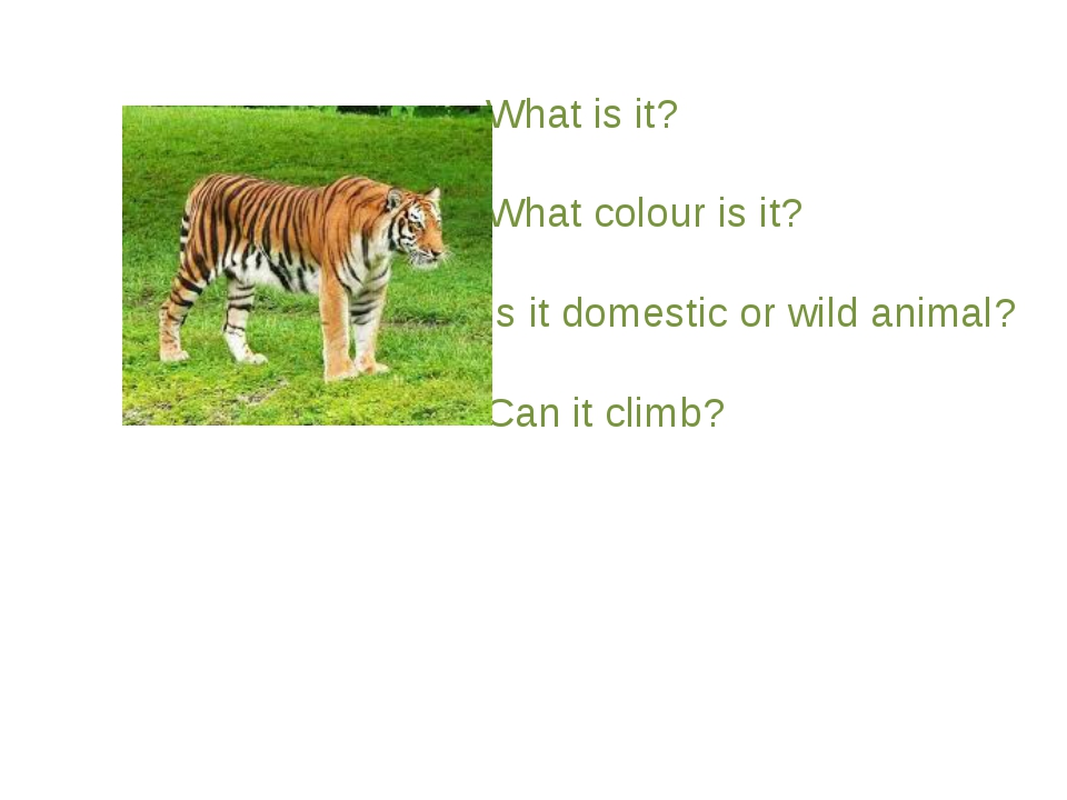 What is it? What colour is it? Is it domestic or wild animal? Can it climb?