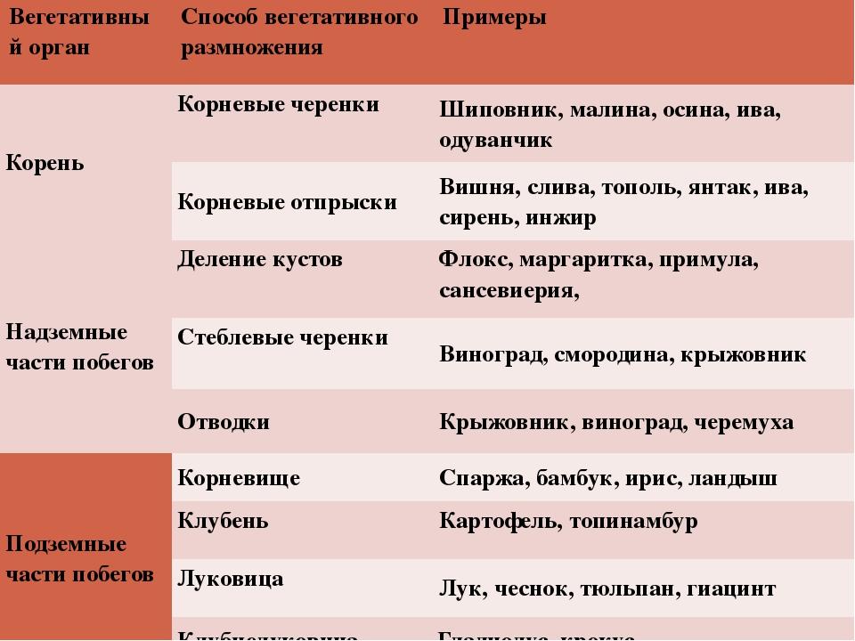 Вегетативный орган Способ вегетативного размножения Примеры Корень Корневые ч...