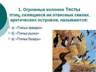 1. Огромные колонии Тесты птиц, селящиеся на отвесных скалах арктических остр