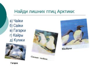 Найди лишних птиц Арктики: а) Чайки б) Сайки в) Гагарки г) Кайры д) Кулики Га