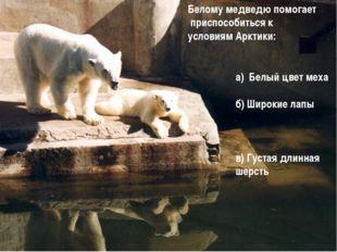 а) Белый цвет меха б) Широкие лапы в) Густая длинная шерсть Белому медведю п