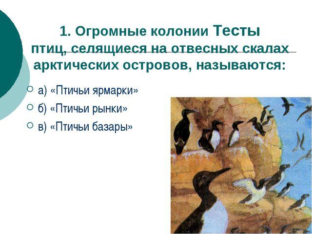 1. Огромные колонии Тесты птиц, селящиеся на отвесных скалах арктических остр...