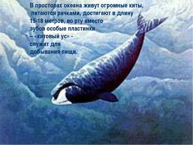 В просторах океана живут огромные киты, питаются рачками, достигают в длину 1...