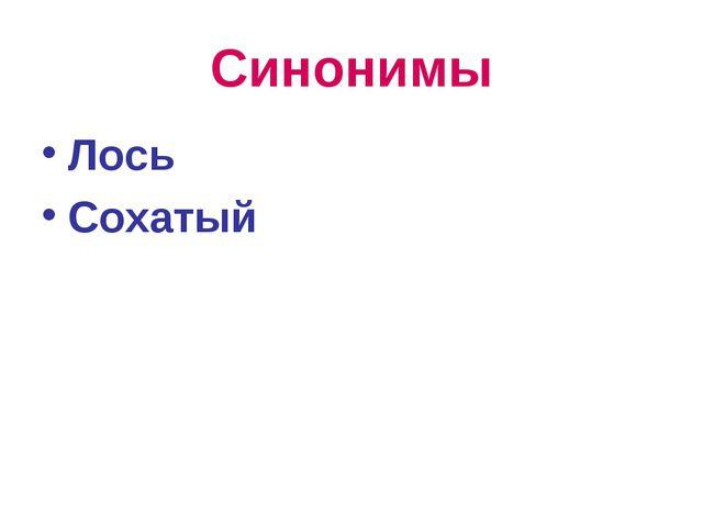 Синонимы Лось Сохатый