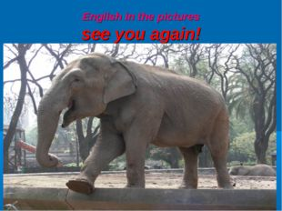 English in the pictures see you again!