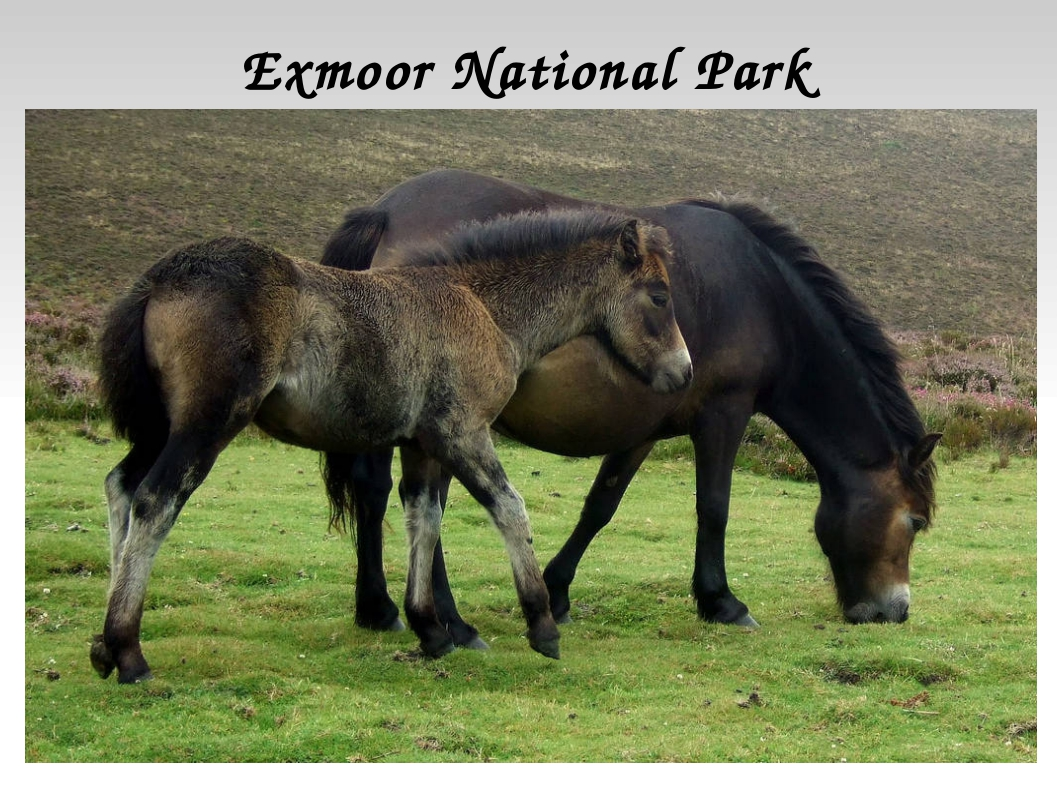 Exmoor National Park