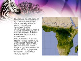 В Африке преобладают пустыни и дождевые леса. Между ними – поля, заросшие тра