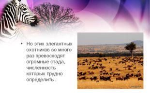 Но этих элегантных охотников во много раз превосходят огромные стада, числен
