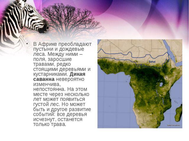 В Африке преобладают пустыни и дождевые леса. Между ними – поля, заросшие тра...