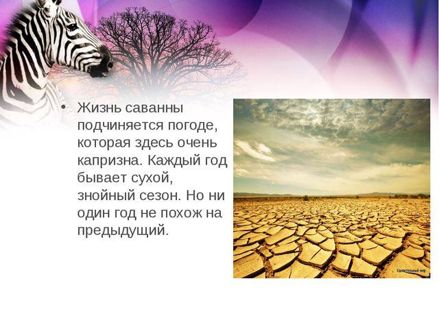 Жизнь саванны подчиняется погоде, которая здесь очень капризна. Каждый год бы...