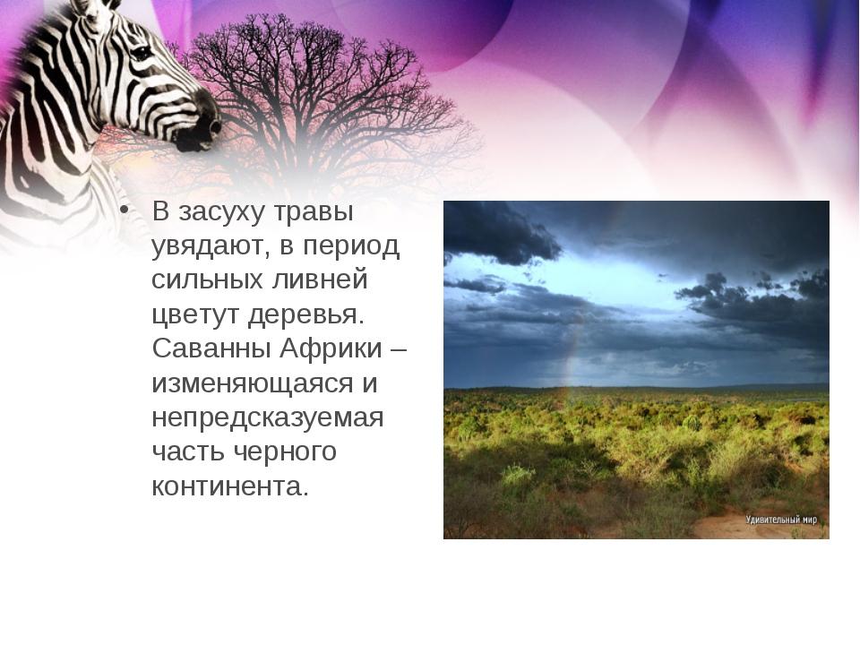 В засуху травы увядают, в период сильных ливней цветут деревья. Саванны Африк...