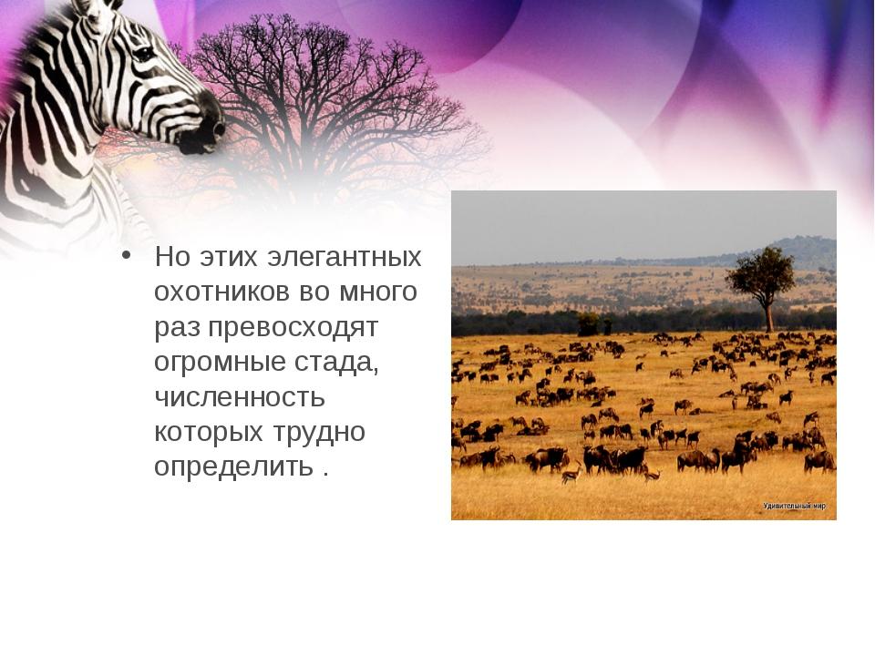 Но этих элегантных охотников во много раз превосходят огромные стада, числен...