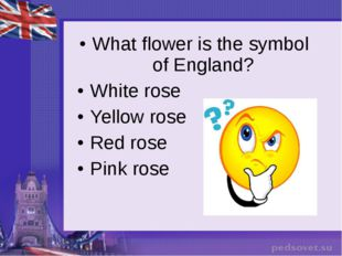 What flower is the symbol of England? White rose Yellow rose Red rose Pink rose