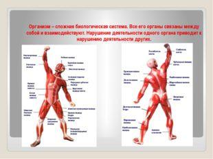 Организм – сложная биологическая система. Все его органы связаны между собой