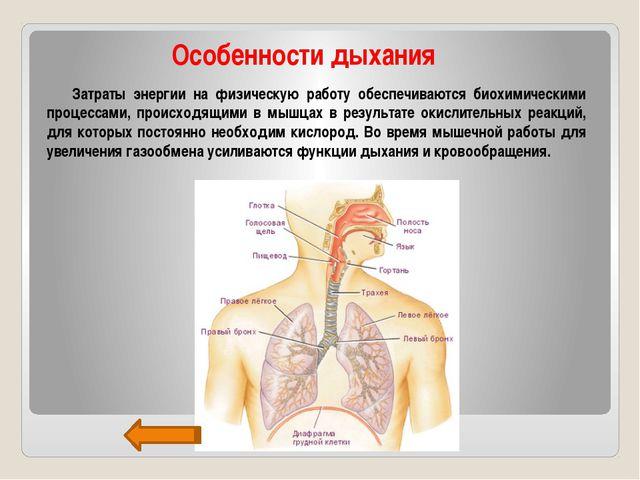 Особенности дыхания Затраты энергии на физическую работу обеспечиваются биох...