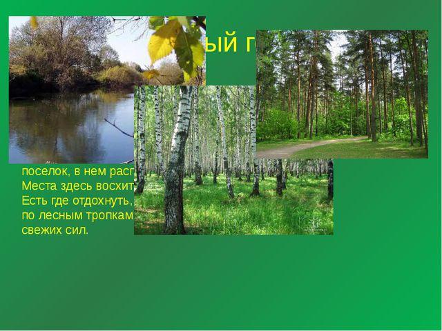 Зеленый город Зеленый Город - это массив смешанного леса, менее чем в двух де...