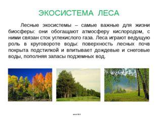Лесные экосистемы – самые важные для жизни биосферы: они обогащают атмосферу
