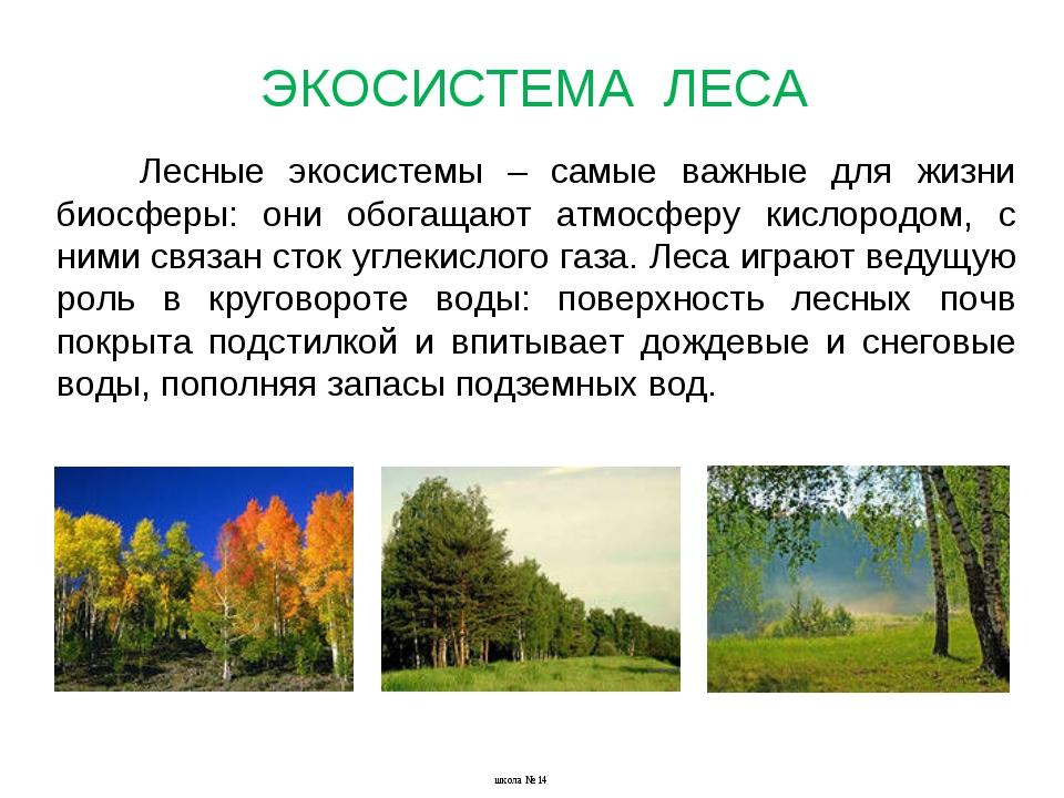 Лесные экосистемы – самые важные для жизни биосферы: они обогащают атмосферу...