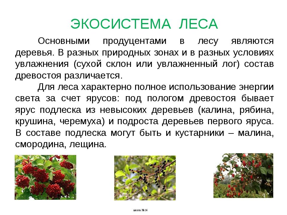 Основными продуцентами в лесу являются деревья. В разных природных зонах и в...
