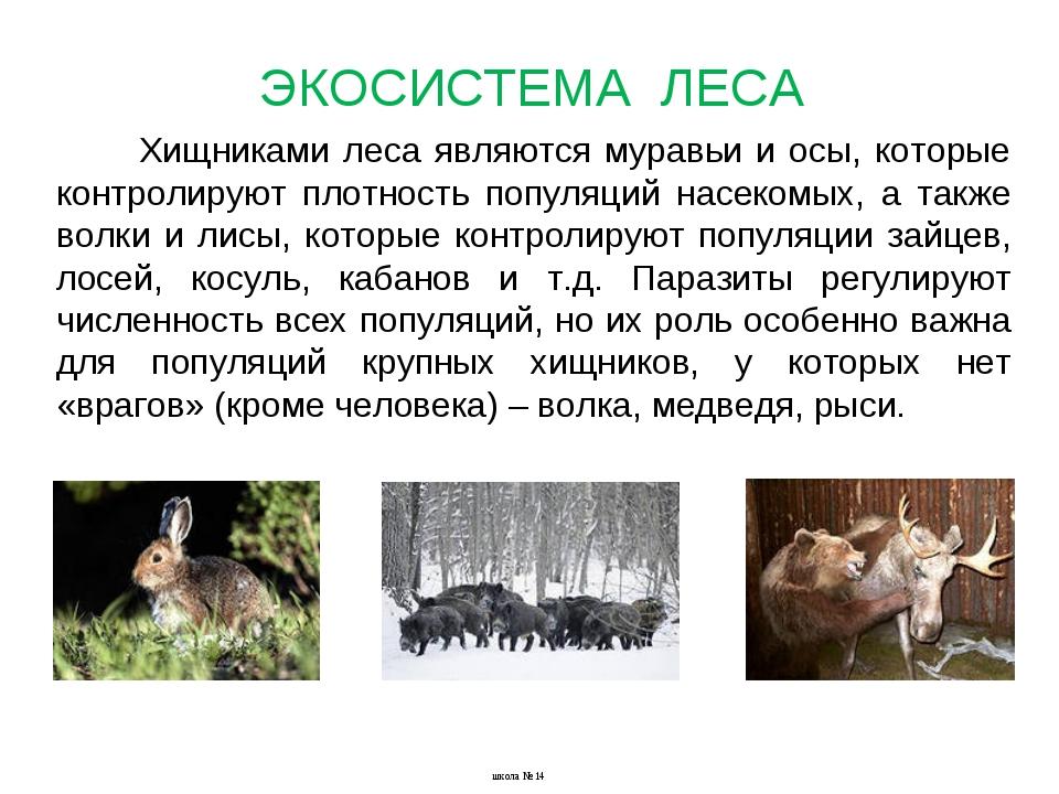 Хищниками леса являются муравьи и осы, которые контролируют плотность популяц...