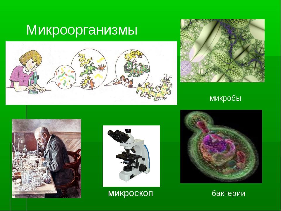 Микроорганизмы микробы бактерии микроскоп