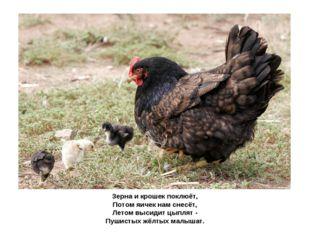 Зерна и крошек поклюёт, Потом яичек нам снесёт, Летом высидит цыплят - Пушис