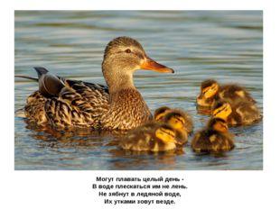Могут плавать целый день - В воде плескаться им не лень. Не зябнут в ледяной