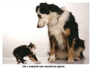 Но с кошкой они заклятые враги.